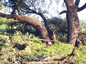 Example of damage done to trees